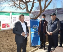Population in Shakhrisabz district will unite in a cooperative for growing raspberries